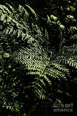 Ferns Photograph - Tranquil Botanical Ferns by Jorgo Photography - Wall Art Gallery
