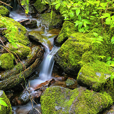 Small Forest. Beauty Photograph - Tranquil Cascade by Stephen Stookey