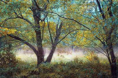 Photograph - Tranquil Dream by John Rivera