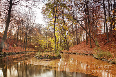 Photograph - Tranquil Forest Pond by Sophie McAulay