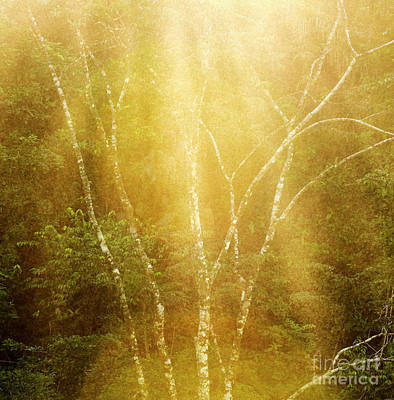 Photograph - Tranquil Forest Tree Background by Tim Hester