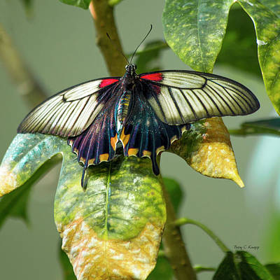 Butterfly Garden Photograph - Tranquil Gardens by Betsy Knapp