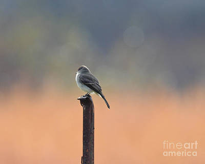 Photograph - Tranquil Morning by Amy Porter