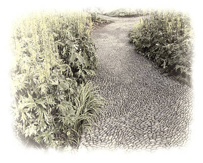 Photograph - Tranquil Path - Photo Art by Ann Powell