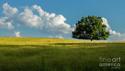 Photograph - Tranquil Solitude Billowing Clouds Oak Tree Field Art by Reid Callaway