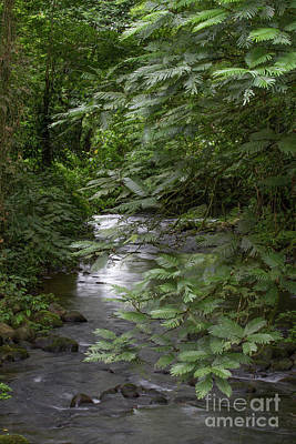 Photograph - Tranquil Stream by Chris Scroggins