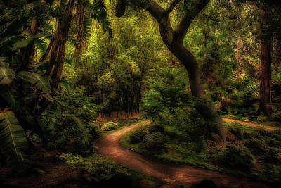 Photograph - Tranquil Walkway by Joseph Hollingsworth