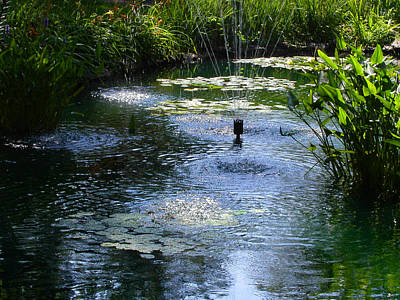 Photograph - Tranquil Waters by Anne Cameron Cutri