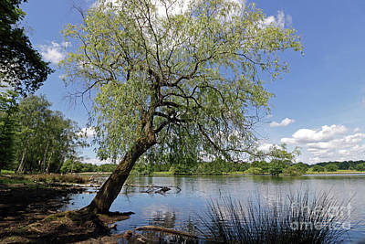 Photograph - Tranquility At The Pen Ponds by Julia Gavin