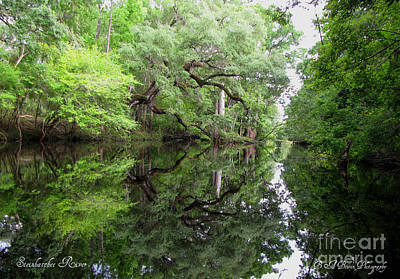 Photograph - Tranquility by Barbara Bowen