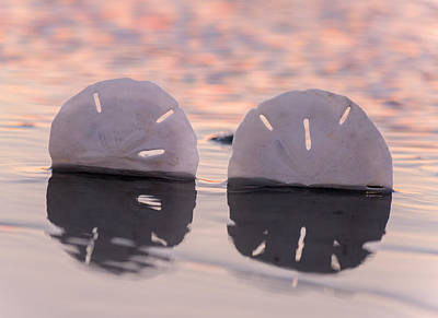 Sand Dollar Photograph - Tranquility  by Betsy Knapp