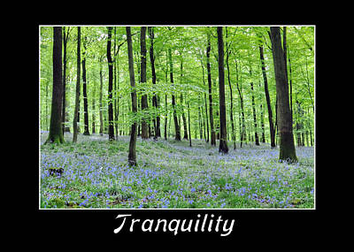 Photograph - Tranquility - Bluebells In Woods by Geraldine Alexander