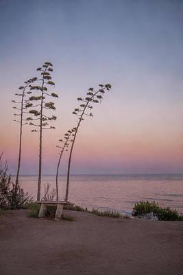 Photograph - Tranquility by Elena E Giorgi