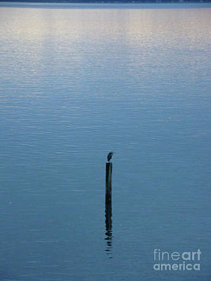 Photograph - Tranquility by Lydia L Kramer