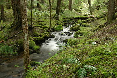 Tranquility Of A Forest Stream Art Print by Jeff Swan