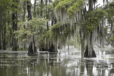 Recent Photograph - Tranquility Swamp by Betsy Knapp