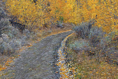 Photograph - Tranquille Creek Trail # 2 by Ed Hall
