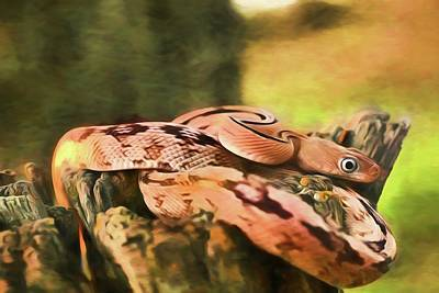 Photograph - Trans-pecos Rat Snake by Kyle Findley