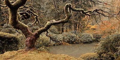 Photograph - Transcendent Maple by Don Schwartz