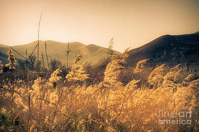 Photograph - Translucent Grasses by Susanna Patras