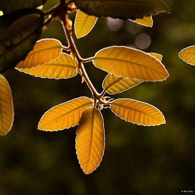 Translucent Leaves Art Print