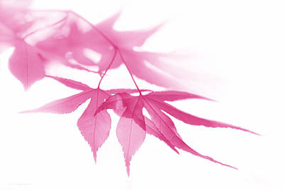 Photograph - Translucent Pink Leaves by Jennie Marie Schell