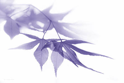 Photograph - Translucent Purple Leaves by Jennie Marie Schell