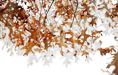 Translucent Art Print by The Forests Edge Photography - Diane Sandoval