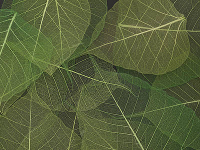 Compostion Photograph - Transparent Leaves by Vesna Cvorovic
