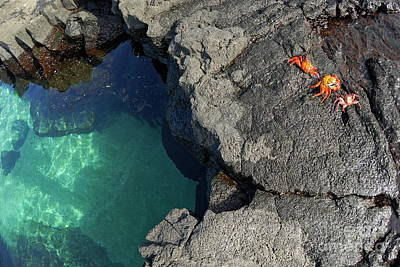Transparent Waters And Volcanic Rocks With Sally Lightfoot Crabs Art Print by Sami Sarkis