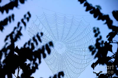 Photograph - Transparent Web by Sheri LaBarr