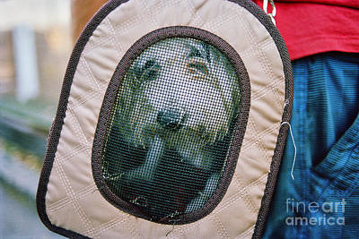 Photograph - Travel Dog by Dean Harte