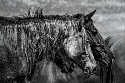 Photograph - Travel Worn by Joan Davis