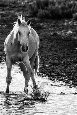 Photograph - Traveler Making A Splash Bw by Belinda Greb