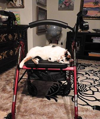 Photograph - Traveling Cat On Moms Rollator by Phyllis Kaltenbach
