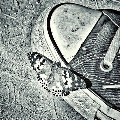 Photograph - Tread Lightly  by Leah McPhail