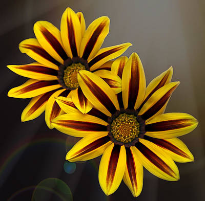 Photograph - Treasure Flowers With Light Flares by Judy Vincent