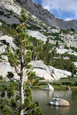 Trees And Lake Photograph - Treasure Lake Pine by Chris Brannen