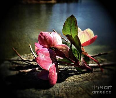 Photograph - Treasures From The Garden by S Forte Designs