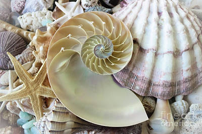 Photograph - Treasures From The Sea by Colleen Kammerer