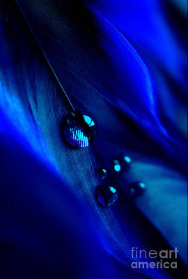 Photograph - Treasures Of Blue by Krissy Katsimbras