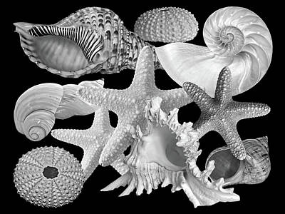 Photograph - Treasures Of The Deep In Black And White by Gill Billington