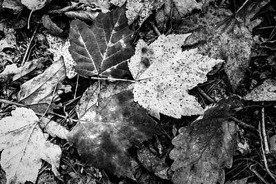 Photograph - Treasures On The Forest Floor Black And White by Debra and Dave Vanderlaan