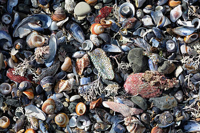 Photograph - Treasures On The Secret Beach by Kathleen Bishop