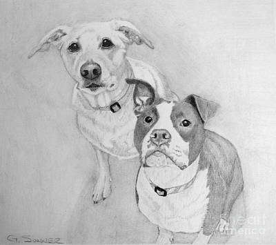 Pitbull Drawing - Treat Please by George Sonner
