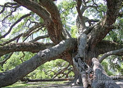 Photograph - Treaty Oak by Dodie Ulery