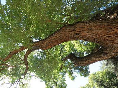Photograph - Tree 1 by Vijay Sharon Govender