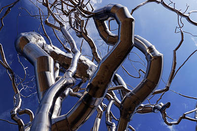 Photograph - Tree Abstract by Christopher McKenzie