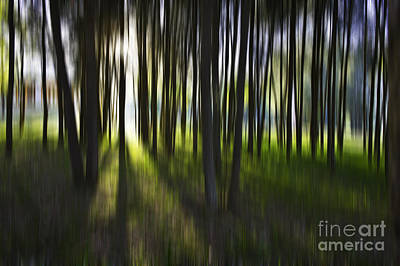 Abstracts Digital Art - Tree Abstract by Avalon Fine Art Photography