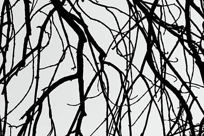 Photograph - Tree Abstract Wb by Mary Bedy